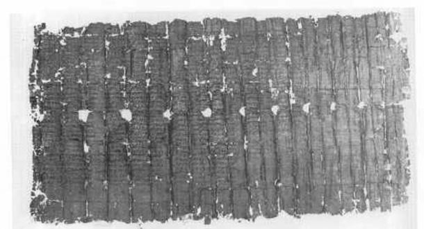 Papyrus found in Herculaneum
